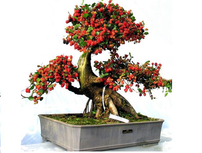 219 Lăng mộ đá, Mộ đá Ninh Bình